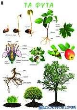 Τα φυτά