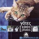 Οι γάτες [1001 photos]