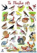 Τα πουλιά (Α)
